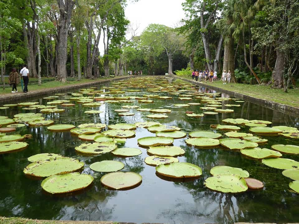 Top attractions of Mauritius : Mauritius Botanical Garden