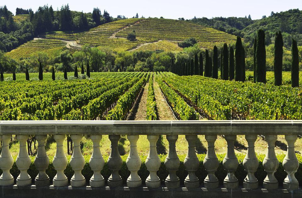 vineyard: wine regions in australia