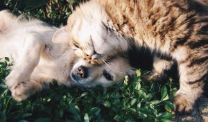 How Can Pets Improve Your Health