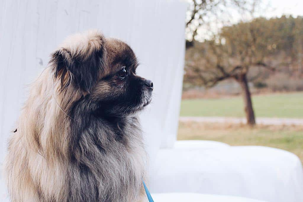 8 Best Tips for Travelling Safely With Your Pets