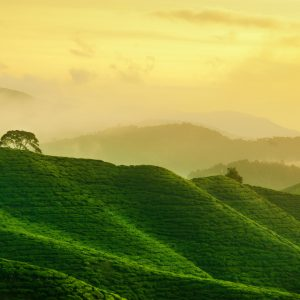 Best Places In Malaysia To Soak In Some Greenery