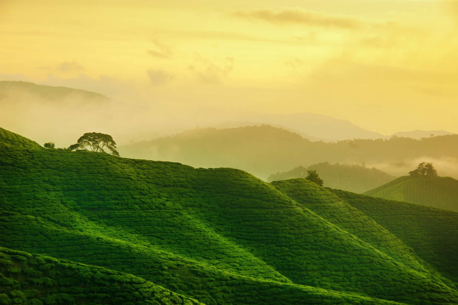 Read more about the article Best Places In Malaysia To Soak In Some Greenery